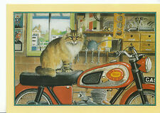 Animals Postcard - Cats - 'Cassius' The Garage Cat - Sat On Motor Bike  AB1817