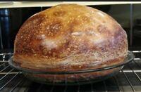 ALASKAN SOURDOUGH STARTER yeast for making big bread dried yeast (a)