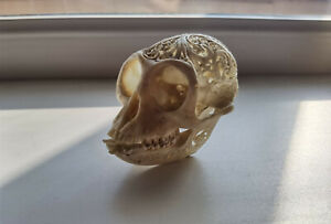 Real SKULL MONKEY CARVING INDONESIAN TAXIDERMY Oddity souvenir