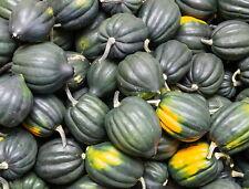75 Table Queen Acorn Squash Cucurbita Pepo Heirloom Seeds - Gift - COMB S/H