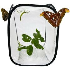 More details for pop up net insect cage - for butterflies, moths, stick insects, caterpillars