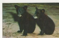 Black Bear Cubs, Canada Postcard, B340