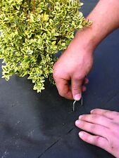 "1000 DeWitt Anchor Pins APB1 6""x1"" SOD Staples Frost Cloth Weed Mat Dog Fence"