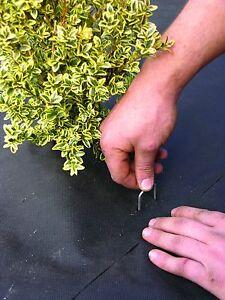 "DeWitt Landscape Fabric Staples Anchor Pins  6"" X 1"" X 6""  576 ct."