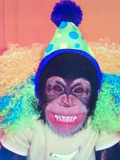 """""""What Happens at the Party Stays at the Party!"""" AVANTI Birthday Card MONKEY"""