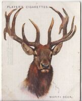 Elk or Wapiti Deer Cervus candensis 80+ Y/O Trade Advertising Card