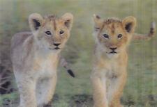 3 -D - Ansichtskarte: zwei junge Löwen - two young lions, Kenia