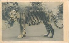 Tiger At The Zoo C.W Faulkner card unposted