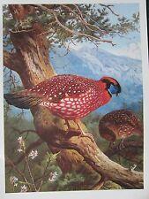 VINTAGE BIRD PRINT ~ TEMMINCK'S TRAGOPAN ~ ARCHIBALD THORBURN