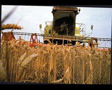 AGRICULTURE / MOISSONNEUSE à la MOISSON du BLE