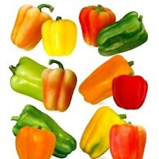 Vegetable Seeds Sweet Pepper Stuffing Mix Open Pollinated NON GMO