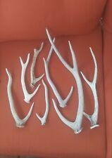 """Antler sheds Horns """"natural Sheds"""""""