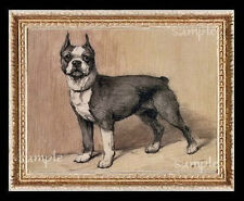 Boston Terrier  Dog Dogs  Miniature  Dollhouse  Picture
