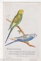 Budgerigar, Capern's Advertising Card, B558