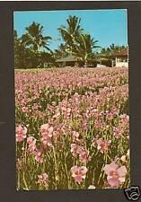 VANDA ORCHIDS ON THE ISLAND OF HAWAII