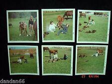 1971 Mid-Century Western HORSE FARM GIRLS in COLORADO Colt Ducks real photo lot