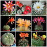 20 semi in miscuglio di Submatucana mix ,piante grasse,seed cactus mix