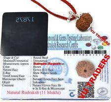 11 Mukhi Rudraksha / Eleven Face Rudraksh Java Bead Lab Certified 14-16 mm