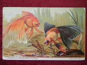 ANIMAL ARTIST SIGNED POSTCARD - FISH AQUARIUM - ZOOLOGISCHER GARTEN 1916