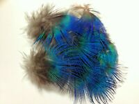 BULK 20pcs Natural Blue 2-4cm Peacock Neck Plumage Feathers DIY Craft Jewelery