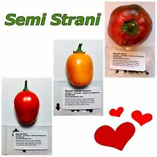 30 BLACK PURE SEEDS of ROCOTO CHILI in 3 Varieties: RED, YELLOW CANARIO, GIANT