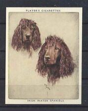 1939 Arthur Wardle Dog Art Portrait Player Cigarette Card Irish Water Spaniel