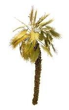 1/35 SCALE DESERT PALM TREE MODEL.  TPD-058 NEW PRODUCT.
