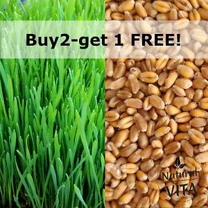 Organic Cat Wheat Grass Seeds Pets Love it! dogs, lizards, Tortoise, guinea pigs