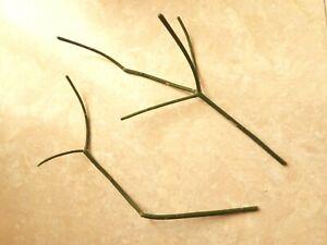 """PENCIL CACTUS Euphorbia Tirucalli x2 cuttings 7"""" unrooted Bio Organic succulent"""