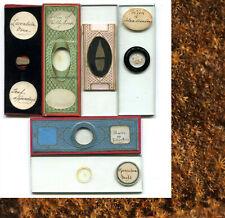 6 Victorian Microscope Slides - Botanical Subjects