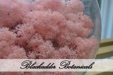 Preserved Reindeer Moss Light Pink 500g