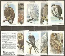 CHURCH & DWIGHT-FULL SET- BIRDS OF PREY - EXC+++
