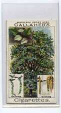(Ja9755-100)  GALLAHER,WOODLAND TREES,THE WHITE POPLAR,1912#85
