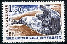 TIMBRE T.A.A.F. / TERRES AUSTRALES NEUF  N° 89 ** FAUNE / LE LEOPARD DE MER