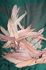30g Scented Eucalyptus Leaves Dried Gunnii Organic UK-Grown Herbal Remedy