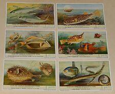 VOOR HET VERBRUIK ONGESCHIKTE VISSEN Série complète 6 Chromos LIEBIG en flamand