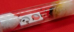 Ant Feeding Dish - Esthetic