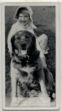 Golden Retriever Dog With Young Child 1930s Ad Trade Card
