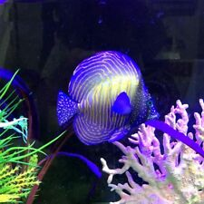 Aquarium Ornament Artificial Floating Striped Fish Nontoxic Fish Tank Decoration