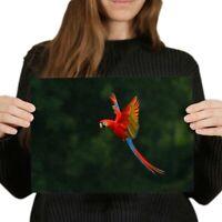 A4 - Macaw Bird Tropical Jungle Poster 29.7X21cm280gsm #2770