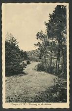 Bergen (NH)  Randweg in de duinen