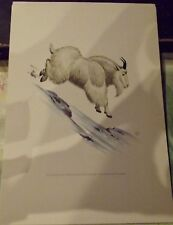 N°183 Mammal Poster Rocky Mountain Goat