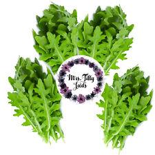 Wilde Rauke 300 Samen Rucola Kräuter Salat Balkon Garten gesund mild Ruccola