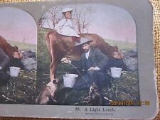 Stereoview Card of Feeding Cat with Milk from Cow