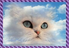 Carte Postale Chat - CPM