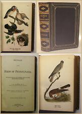Waren Report on the birds of Pennsylvania 1890 Ornithologie Vogelkunde xy