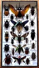 24 Real Mounted Insect Boxed Rare Insects Display Taxidermy Entomology Zoology