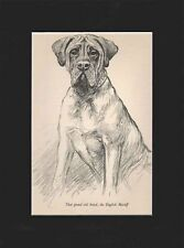 Mastiff Dog Vintage Print 1938 by K.F. Barker 9x12 Matted Grand Old Breed