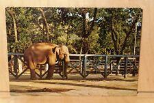 W25) Postcard MARACAY VENEZUELA Elephant Las Delicias Zoo Parque Zoologico park