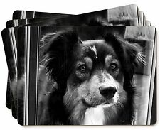 AD-CO81P Liver and White Border Collie Picture Placemats in Gift Box